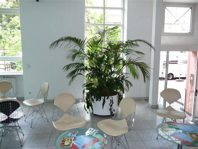 innenraumbegrünung, zimmerpflanzen frankfurt | grüner leben, Garten ideen