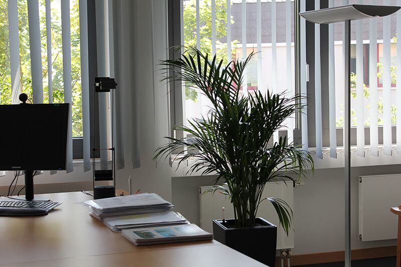 innenraumbegr nung zimmerpflanzen frankfurt gr ner leben. Black Bedroom Furniture Sets. Home Design Ideas