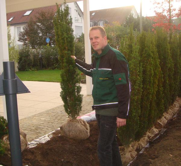 Pflanzung einer  Säulen-Eibenhecke  (als Sichtschutz)