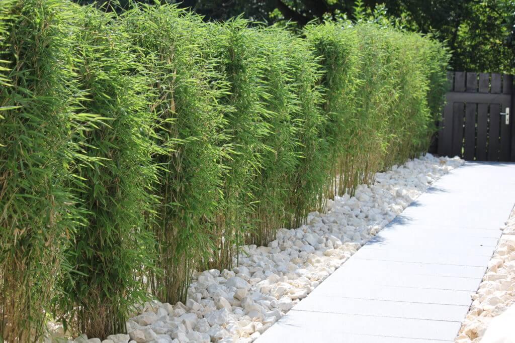 Pflanzung einer Bambushecke